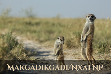 Botswana Makgadikgadi - Nxai