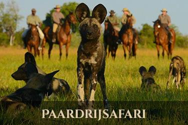 Botswana paardrijsafari
