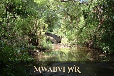 Mwabvi