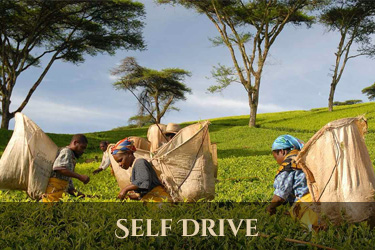 malawi self drive