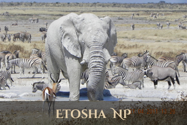 Etosha NP