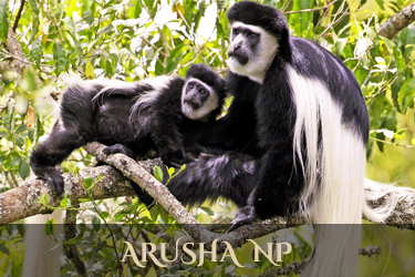 Arusha NP