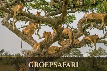 lodge safari groep