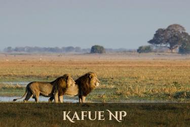 Kafue